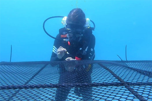 Coral reef restoration in Thailand